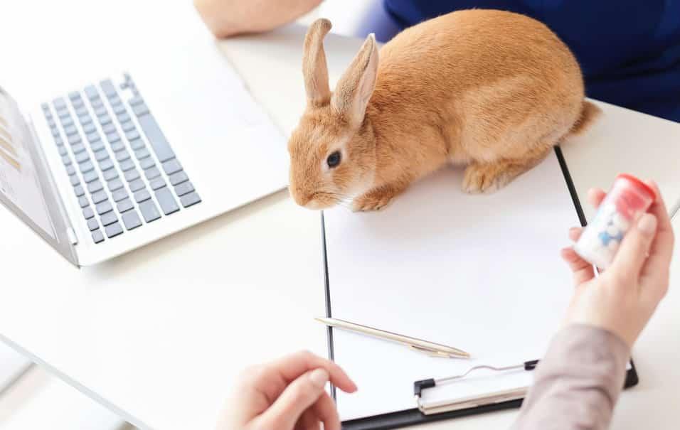 ricetta veterinaria elettronica accademia del lavoro 1 jpg